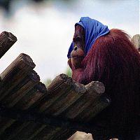 »Red Head With a Blue Scarf« von Karl Eschenbach